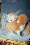2匹の 子猫