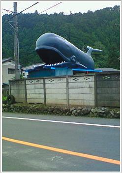 サイクリング クジラ